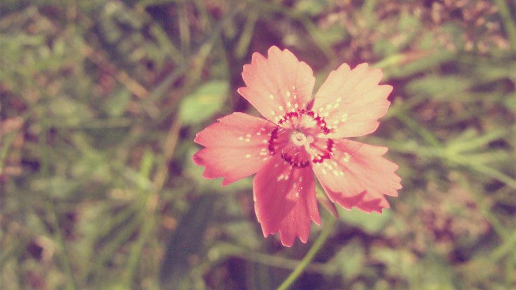 Pink Vintage Flower 250426